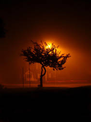 Night Tree by Photopathica