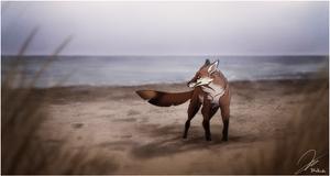 Der Wellengaenger. by BlueHunter