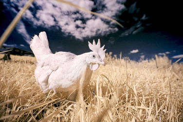 Ghost Chicken by Robyn-Eliza