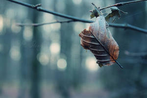 Goodbye Autumn by RStessy