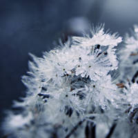 Frosty II by RStessy