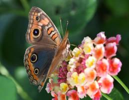 Butterfly by rwetzel