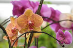 Orchids by rwetzel