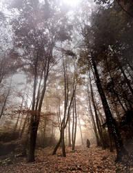 in my forest ... by szuwar