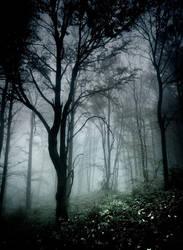 dark in forest by szuwar
