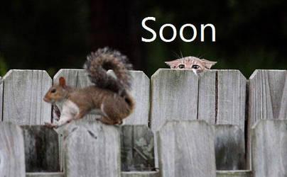 Soon Cat by huskyfish