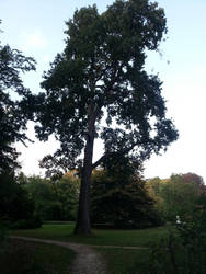 a veryyy long tree by xXBeauty-Of-NatureXx