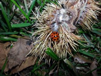 lady bug by xXBeauty-Of-NatureXx
