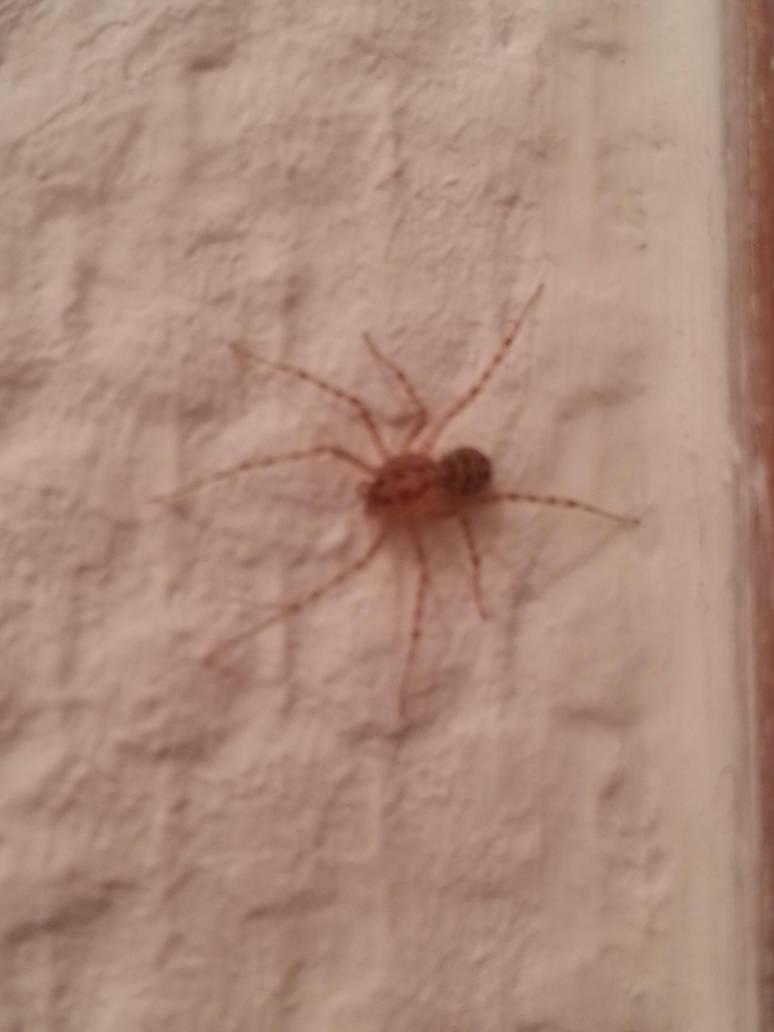 spider (2) by xXBeauty-Of-NatureXx
