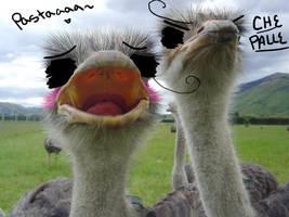 Heta-Ostrich: N. and S. Italy by Len-Kun13