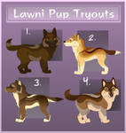 ::Lawni Pup Try-Out:: by Ariel-Hunter
