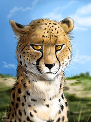 Grumpy Spots by TaniDaReal