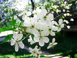 Blossom Vol.5 by ladylerika