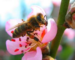 Bee by Randal01