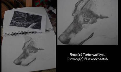 Wolf progress 1 by BlueWolfCheetah