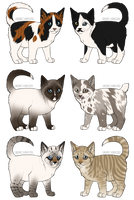 Kitten Adoptables 2 ONE LEFT by galianogangster
