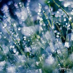 It's raining stars tonight by Korpinkynsi