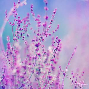 Sweet Dreams by Korpinkynsi