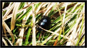 Bug by sirlatrom