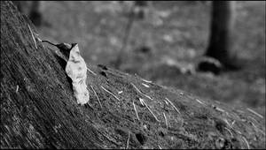 Last of Fall by sirlatrom