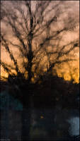Washing away the trees by sirlatrom