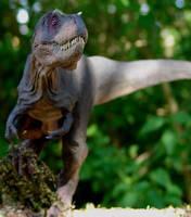 Gotcha by Gorgosaurus