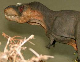 Daspletosaurus detail by Gorgosaurus