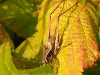Mysterious grashopper by Stilleschrei