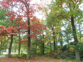 Autumn shine by Stilleschrei