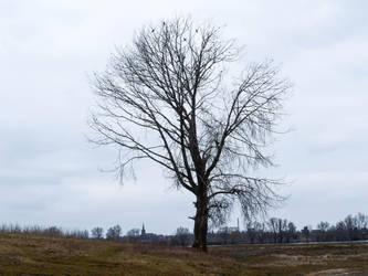 Desolated by Stilleschrei