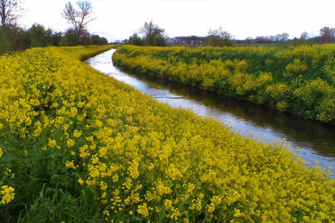Follow the yellow river by Stilleschrei