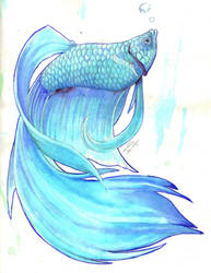 Blue Betta by Nanasschevelu