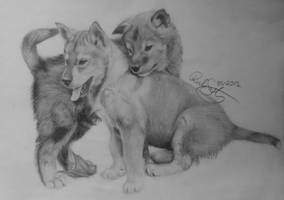 Wolfpuppies by Devions
