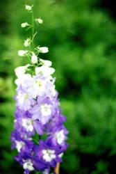 Purple flower by KatelynPryor