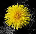Sun of the flowers by maritacatrine