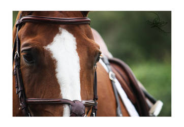 Weltensaga by Equus-Photography