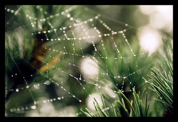the web we weave by ckatz