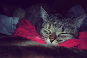 Nap Time by AnaRosaPhotography