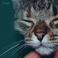 Sparkling nose by AnaRosaPhotography