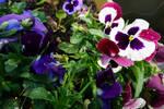 flower  thoughts by ingenierocuevas