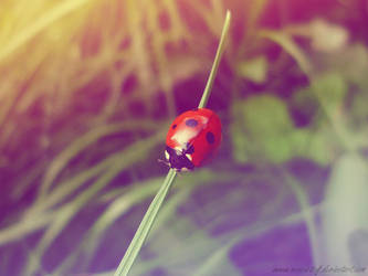 Nice to meet you... by SuzanneLaither