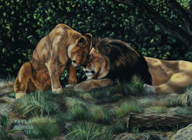 Lions by ascenciok