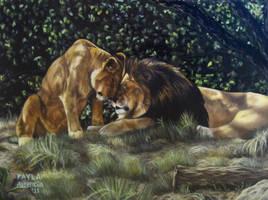 Lions Photo Version by ascenciok