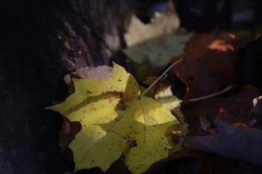 Leaves In Rest by Modernmilk