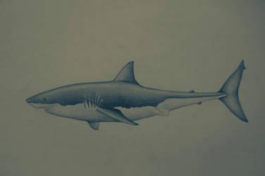 shark by purpleavatar