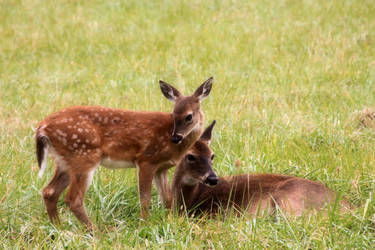 Deer Mommy, by Shadowhawk9973