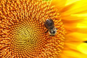 The Pollen Bar... by Shadowhawk9973