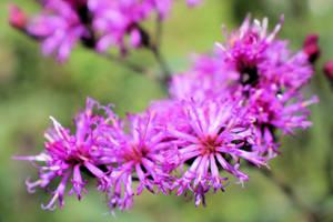 Beautiful Weeds by Shadowhawk9973