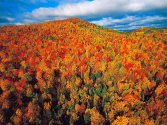 Fall forest in Charlevoix by vinland