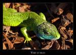 Big green lizard by lasaucisse